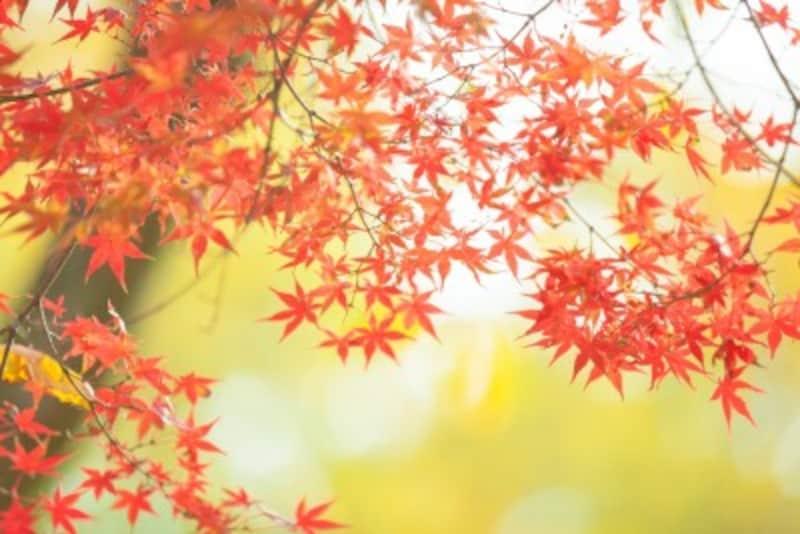 紅葉に関する英語表現とは?