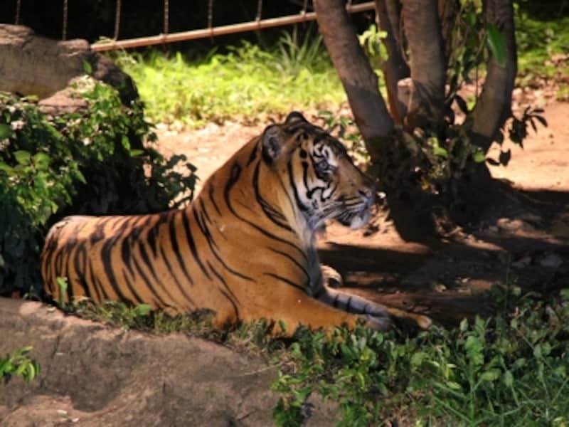 夏休み期間に行われる「よこはま夜の動物園」ではいつもと違う動物たちの姿が見られます(画像提供:ズーラシア)