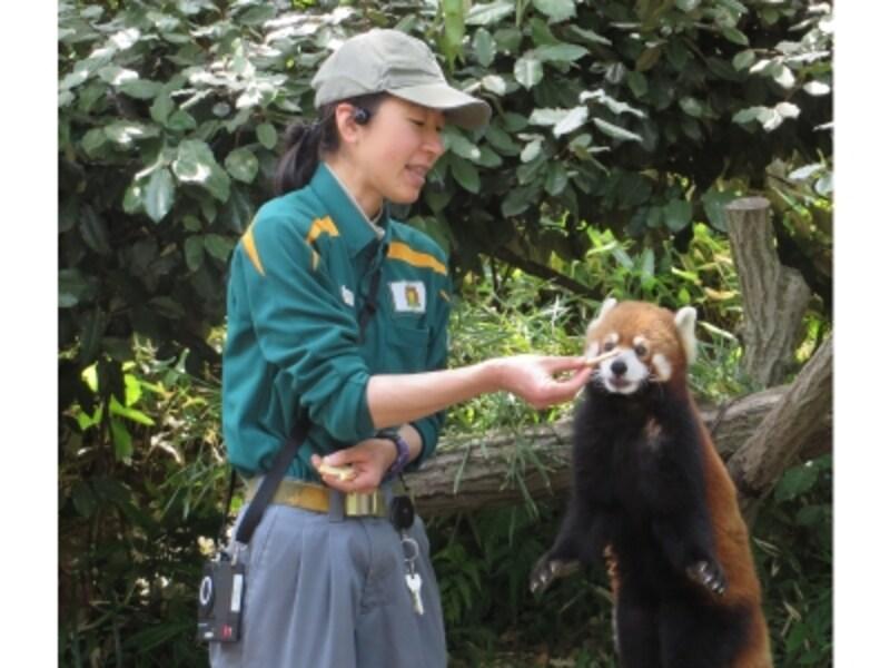 各園で毎日行われる動物ガイドイベントは要チェック(画像提供:ズーラシア)