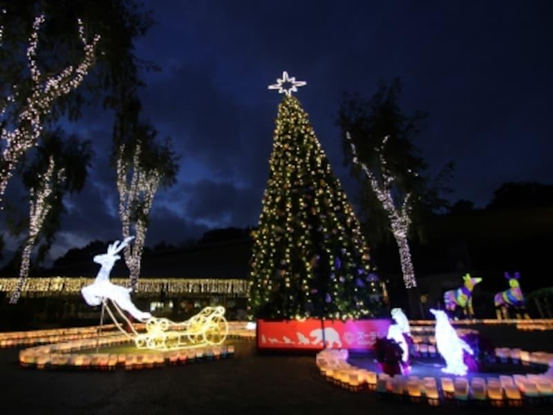 クリスマス時期の動物園ではイルミネーションやクリスマスガイドが行われます(画像提供:ズーラシア)