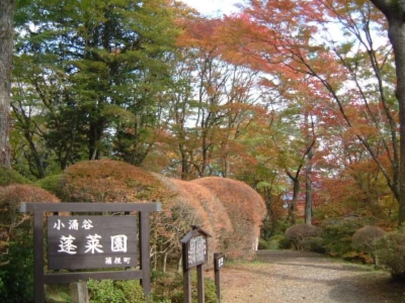 蓬莱園の紅葉・黄葉(1)