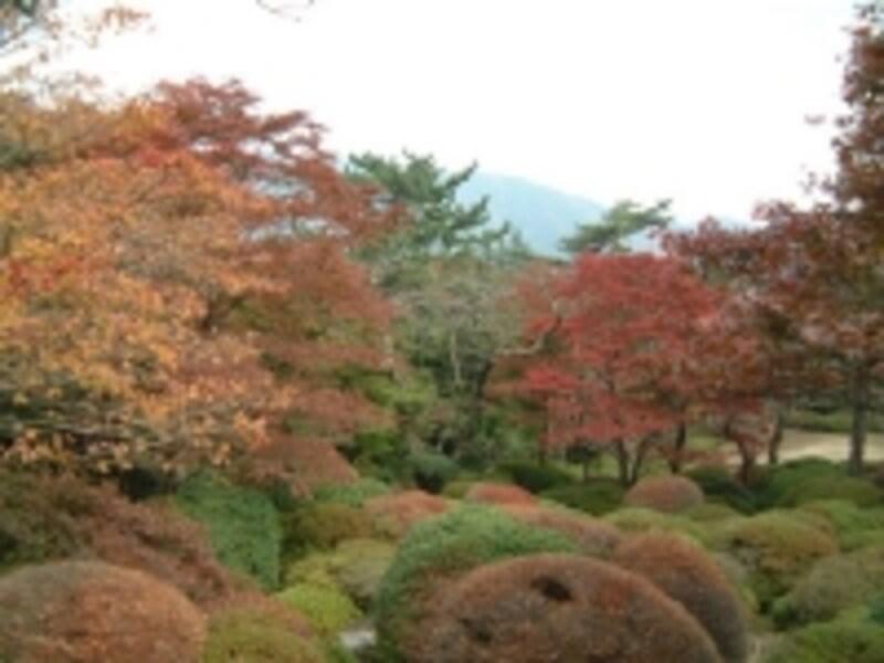 蓬莱園の紅葉・黄葉(2)