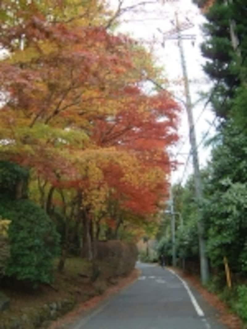 蓬莱園の紅葉・黄葉(4)