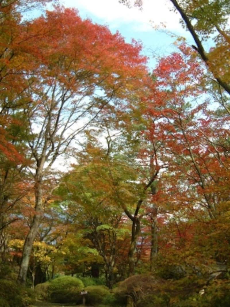 蓬莱園の紅葉・黄葉(5)