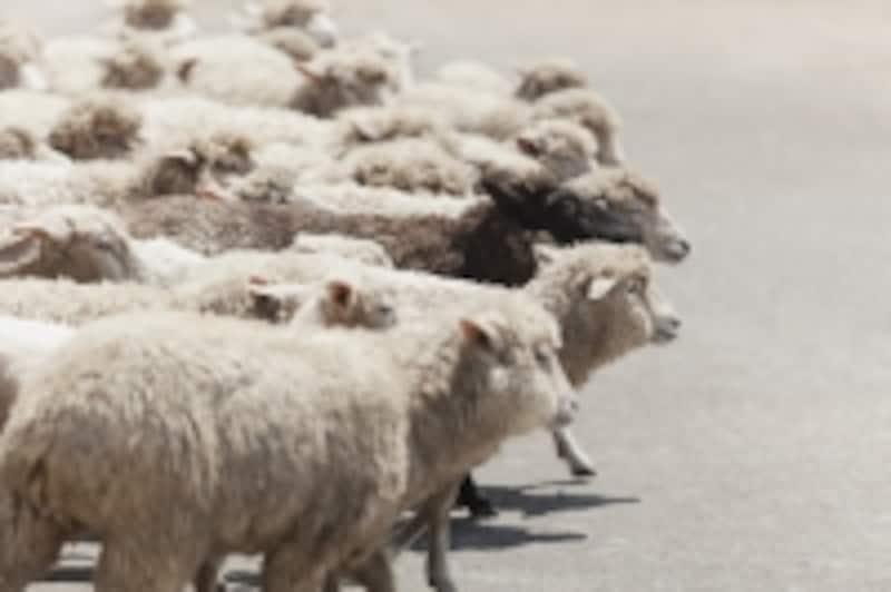 群羊を駆りて猛虎を攻む