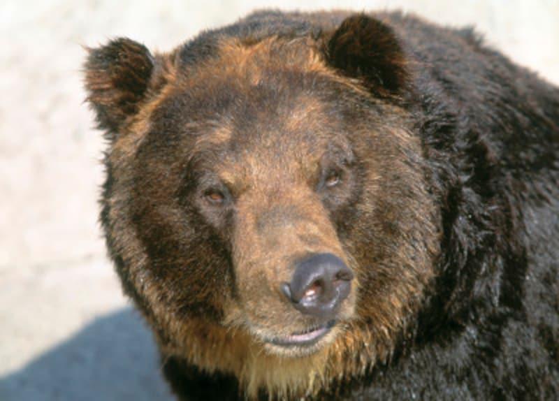 キャンプ場での熊対策