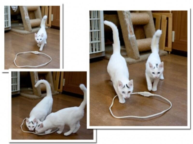 実験2:白猫姉妹(素通り)
