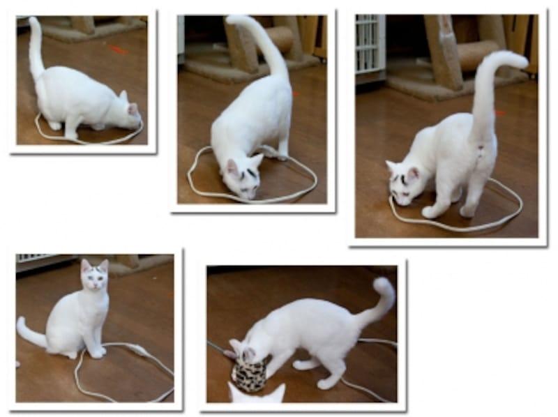 実験2:白猫姉妹(気になる~気になる)