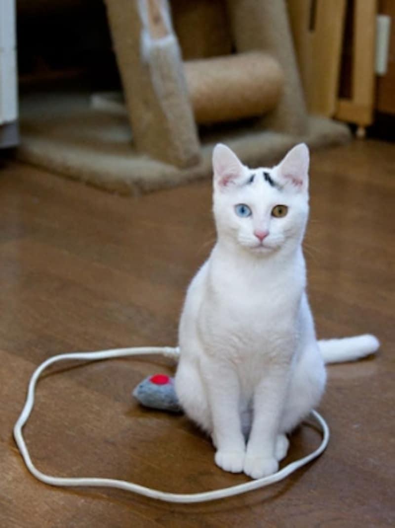 実験2:白猫姉妹(転送完了)