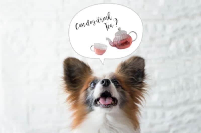 犬undefinedお茶undefinedハーブティーundefined緑茶undefined紅茶undefinedほうじ茶undefined麦茶undefined与えてもいいundefined与えちゃダメ