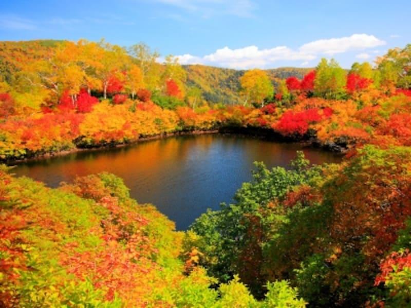 大雪高原温泉エゾ沼の紅葉
