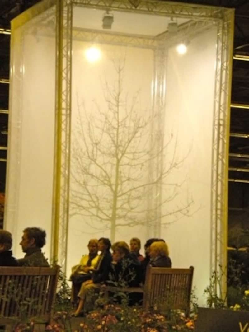 幻想的な木のシルエットのもとで一休み