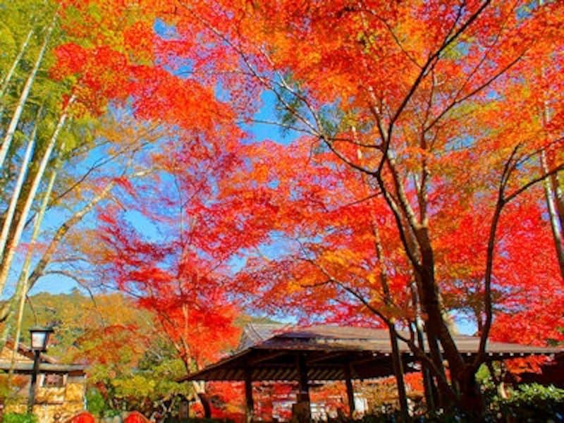 修善寺温泉竹林の小径の紅葉