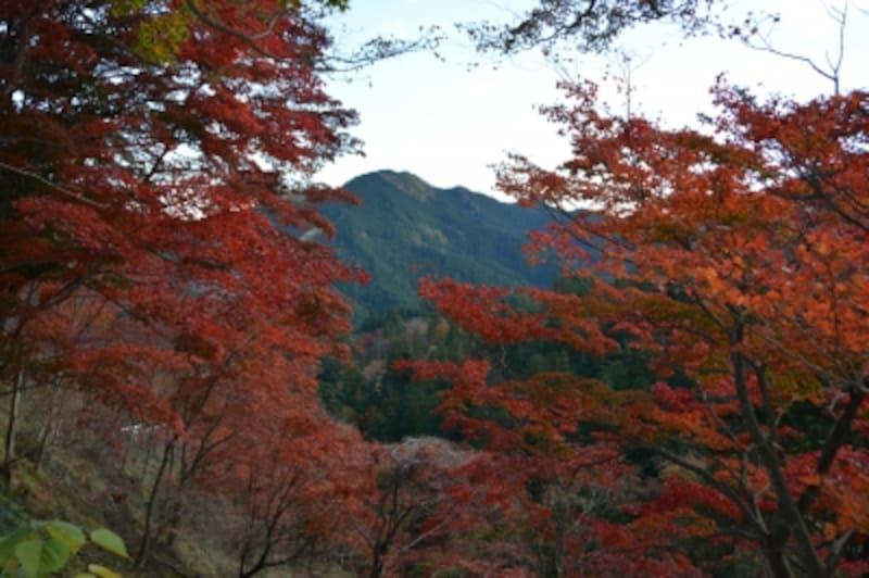 白雲山の紅葉