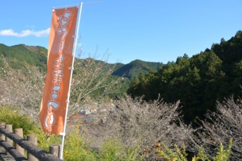 名栗渓谷の十月桜
