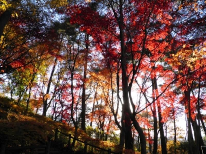 天覧山の紅葉