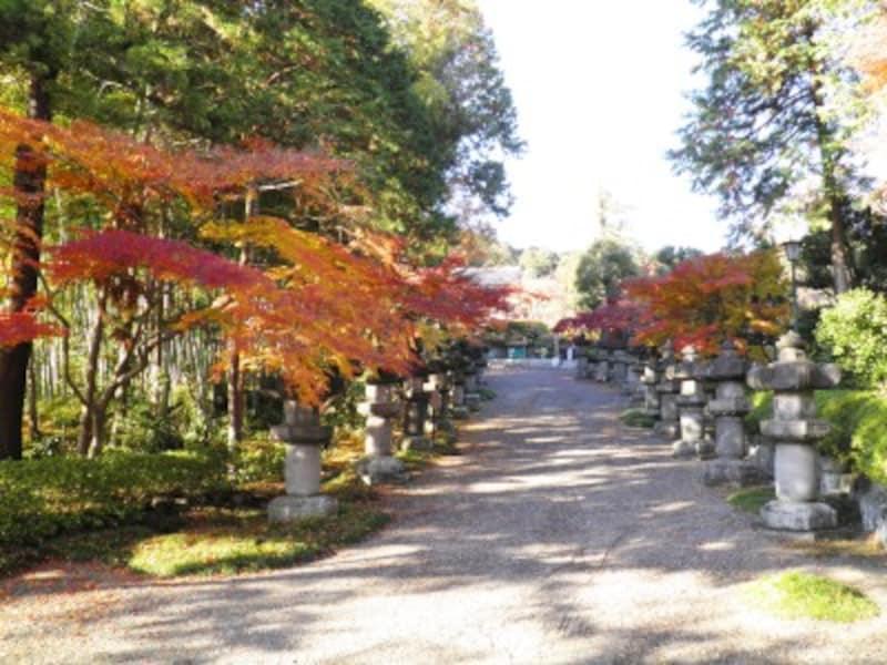 左右の両側が紅葉で彩られる能仁寺の参道