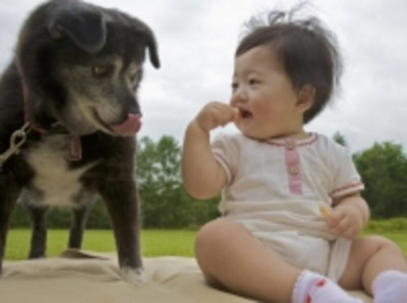 シニア犬と子供