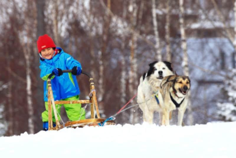 犬ぞり,冬,雪,ウィンタースポーツ,ドッグ,雪山,ハスキー,犬,そり,滑走,運転