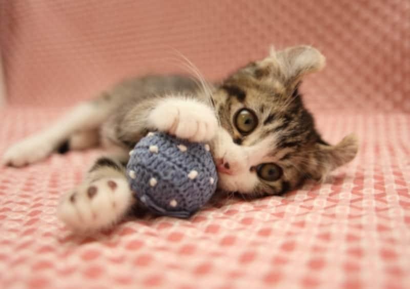 猫が喜ぶ遊び方