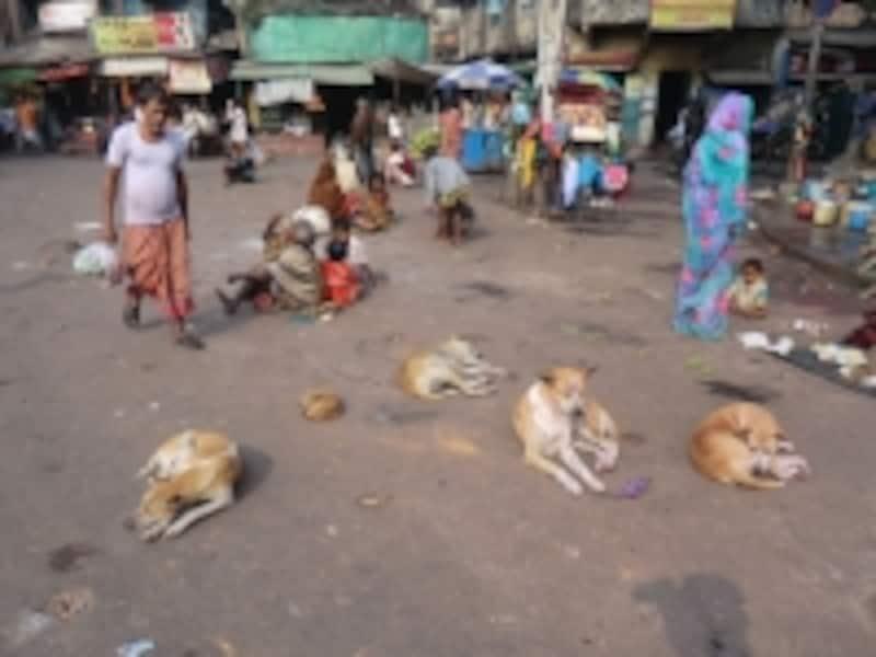 インドには野良犬が多い…