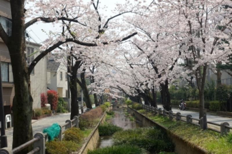 四季を通じて楽しめる桜並木