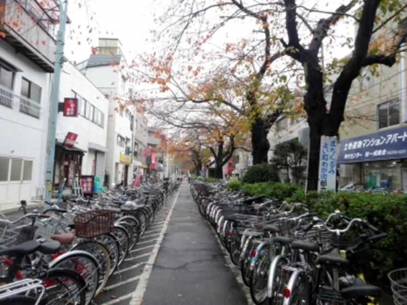 緑道が自転車置き場になっている