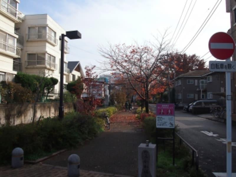 桜並木はまだまだ続く