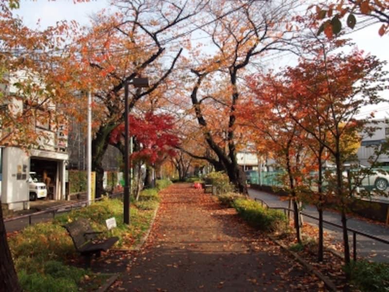 桜のオレンジ色ともみじの紅葉が素敵だ