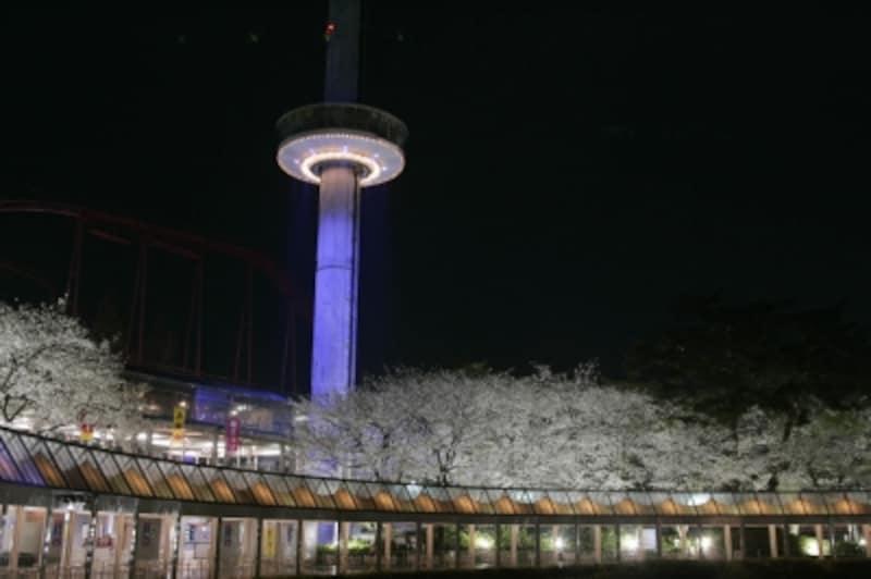 夜桜も楽しめる西武園ゆうえんち