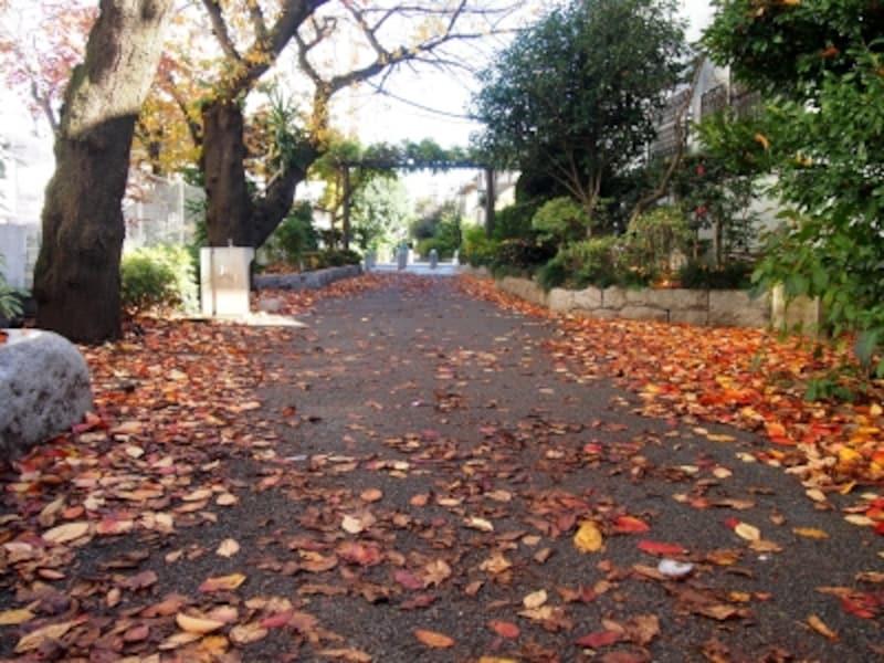 歩くのが楽しくなる緑道だ
