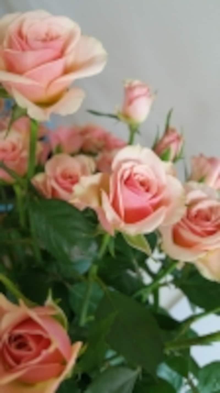 生花イルゼ