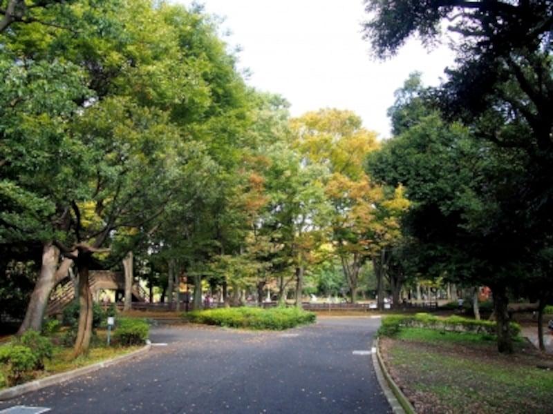 広くて、自然豊かな公園だ
