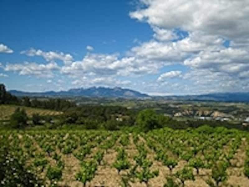 モンセラット山が背部にそびえるペネデス地方
