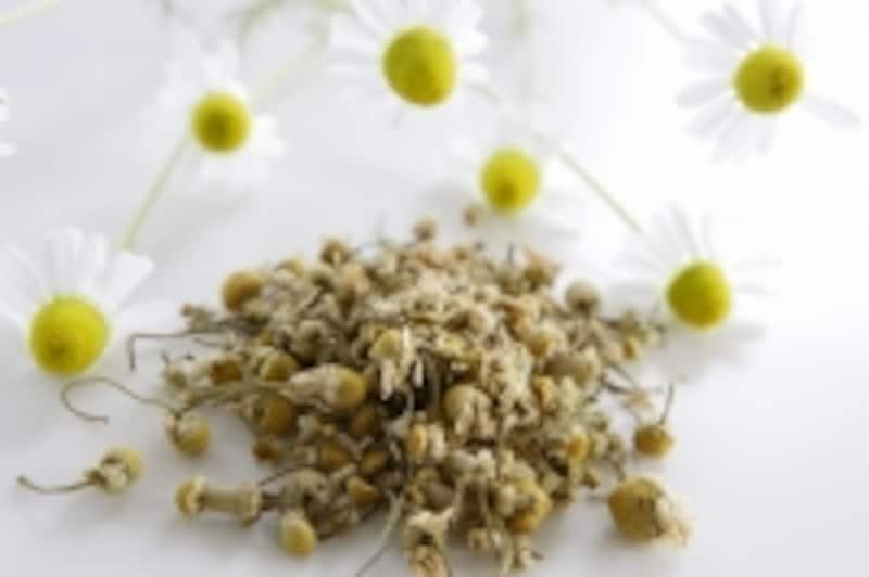 小さくて可愛らしい身体には抗炎症作用に優れた薬理効果がたっぷり詰まった植物です