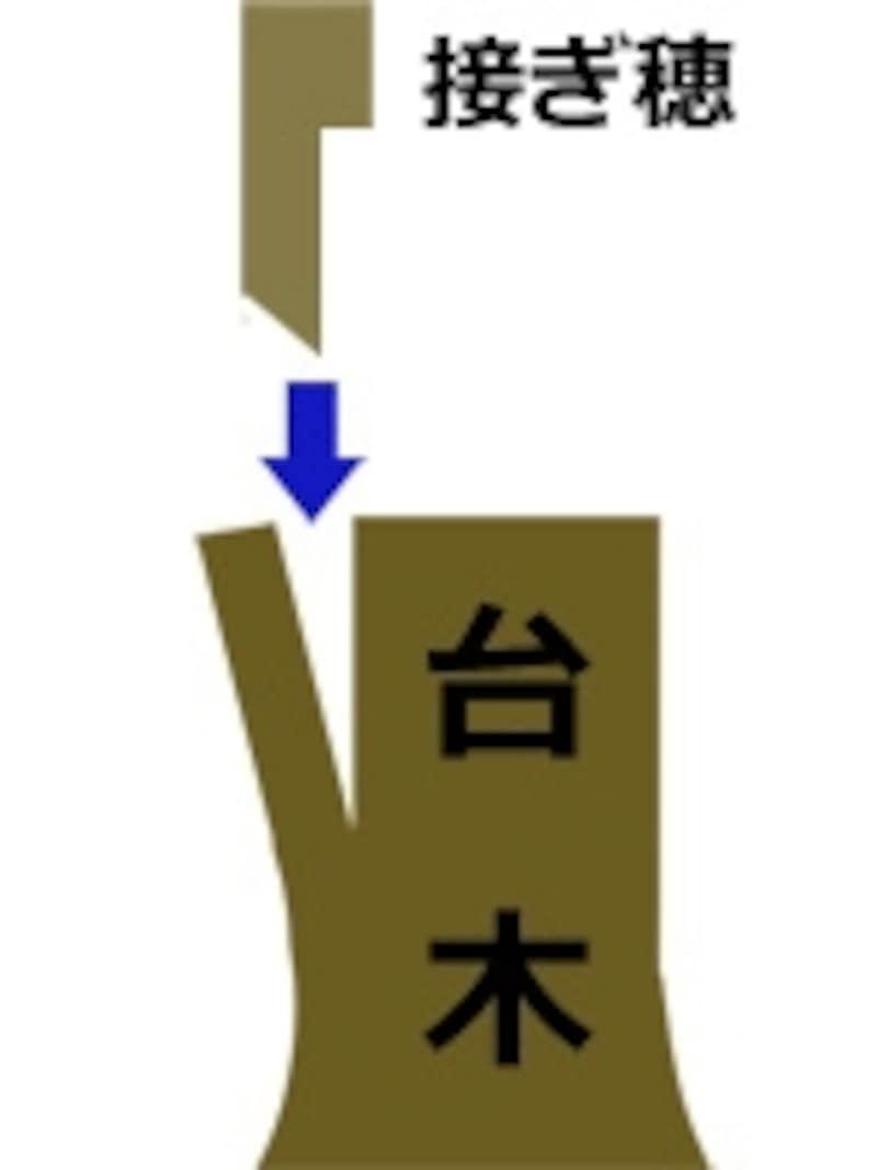 基本の枝接ぎ