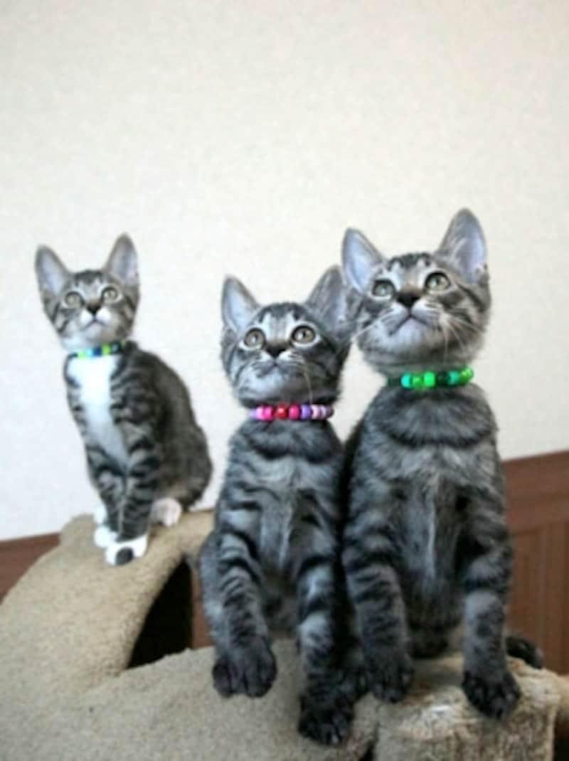 順調に成長した三兄弟