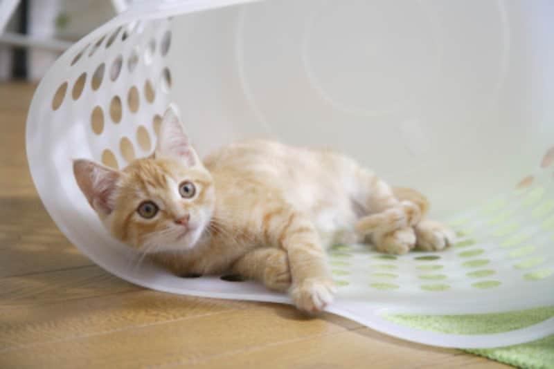 猫は飼い主を選ぶ? 猫との縁…その出会い、運命?