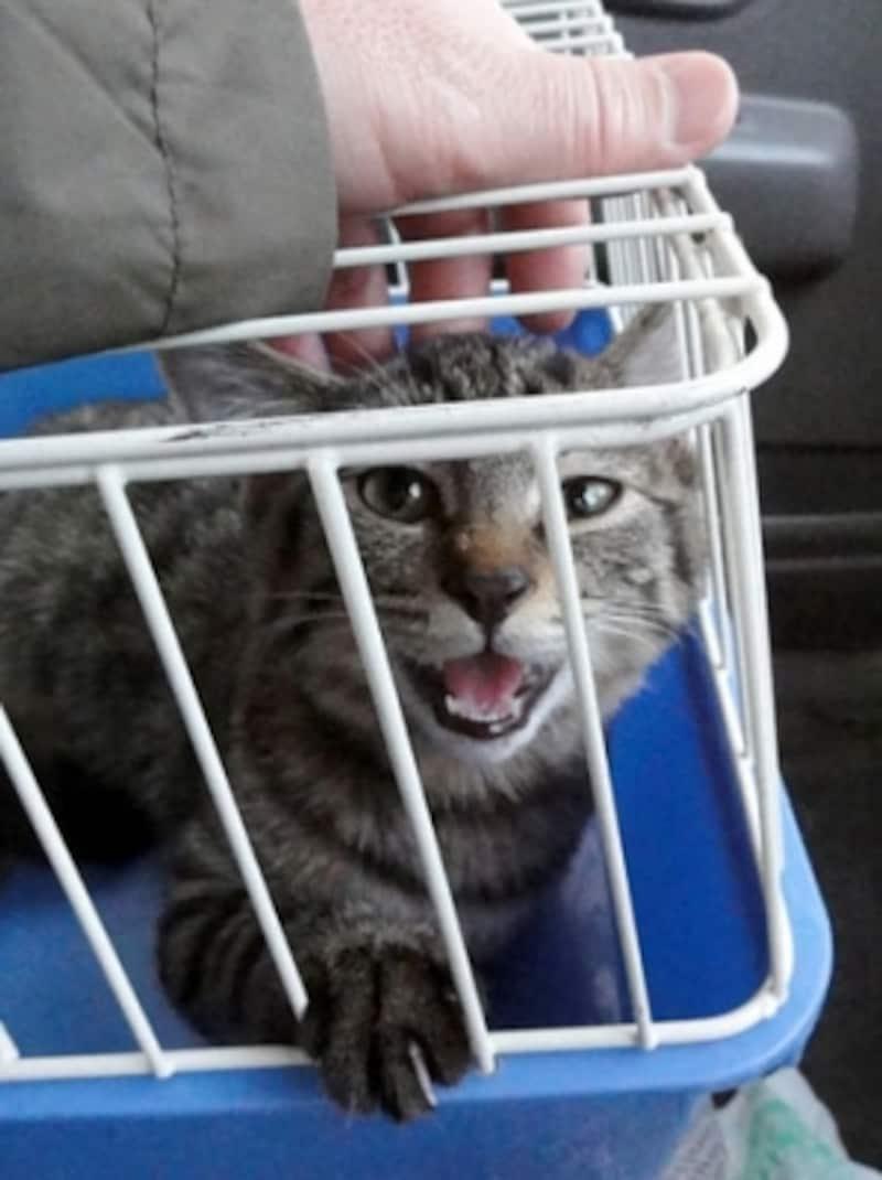 入院したと聞いて迎えに行った帰り、とっても元気でびっくり!