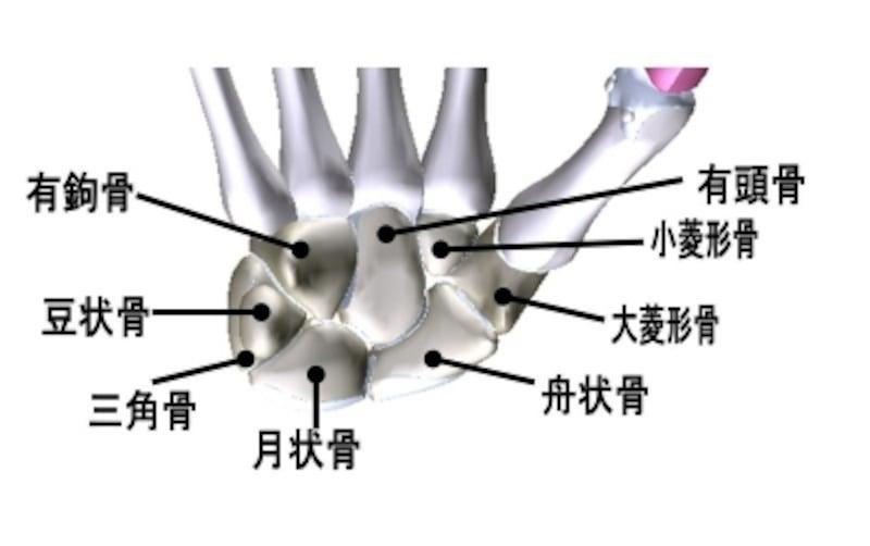 手根骨,覚え方,語呂合わせ,手の骨,手の有頭骨と関節を構成しないのはどれか,手根骨覚え方,手の月状骨と関節,月状骨と関節をつくる,関節面,しゅこんこつ,理学療法士,国家試験,勉強法,解剖学