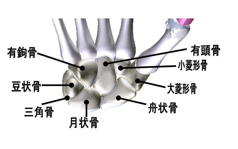 骨 の 名前 足 の 人体の骨の名称と数を解剖のイラストを用いて詳しく解説