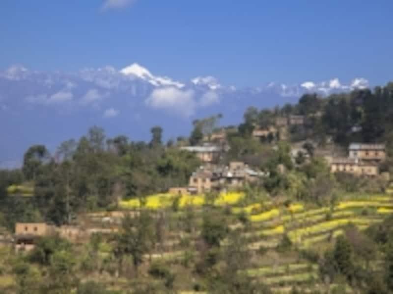ナガルコットから眺めるヒマラヤと菜の花畑