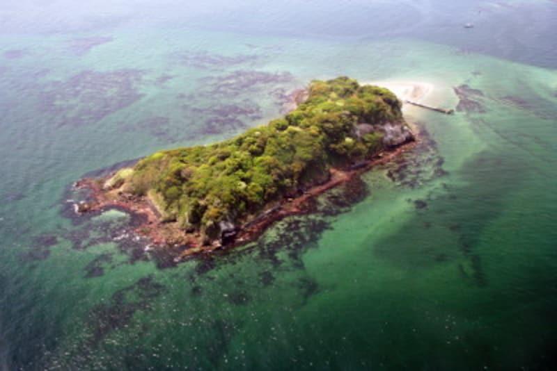 上空から見た猿島(写真提供:横須賀市観光協会)