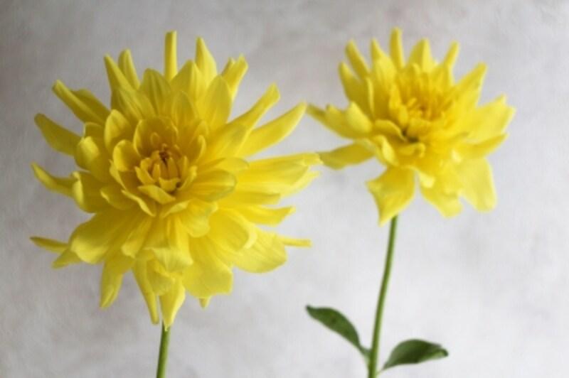 進化を遂げたデジタルカメラは、自動的に花の撮影に最適な設定を判断してくれる