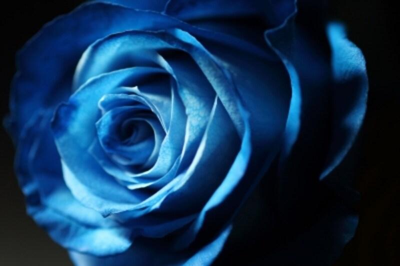 花の持っている立体感や質感、透明感は「逆光」によって際立つ