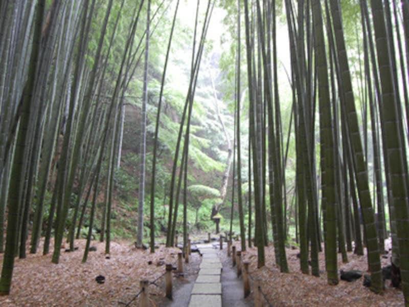 報国寺の「竹の庭」