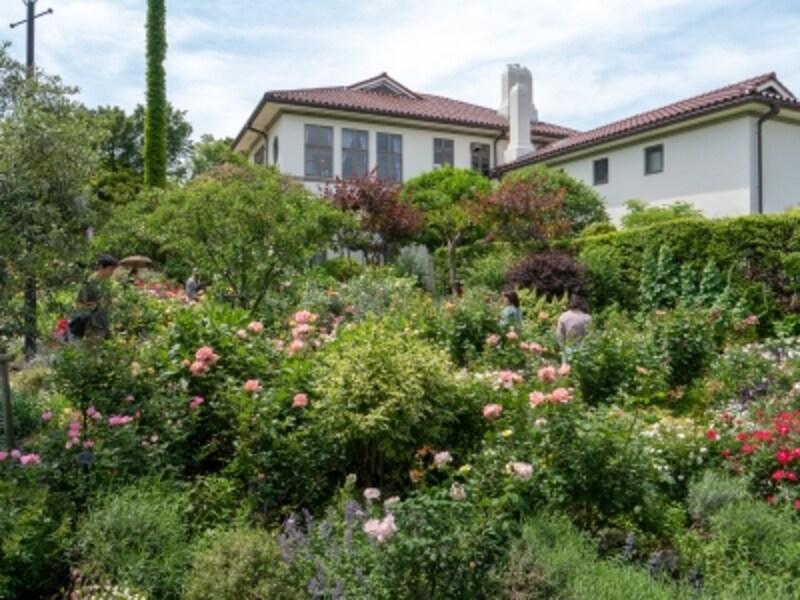 イギリス館裏庭はバラと多年草を組み合わせたガーデンとなっています(2018年5月11日撮影)