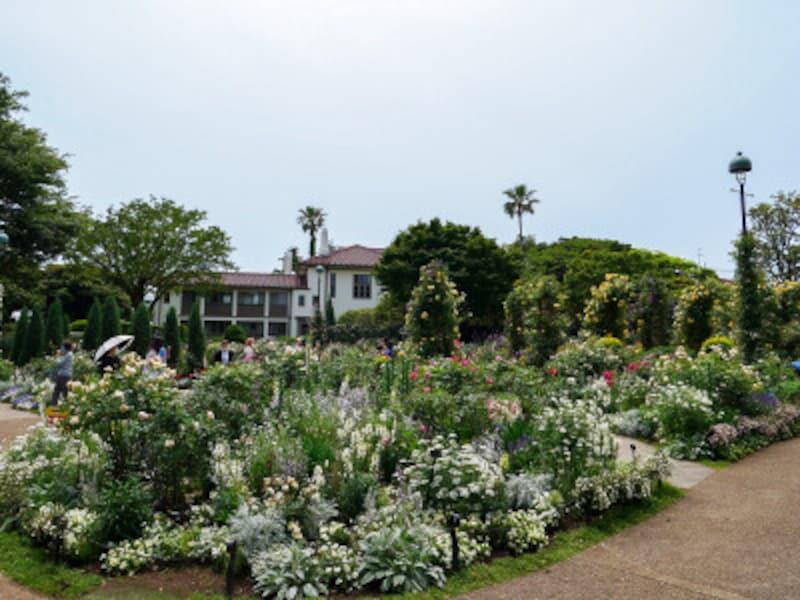 イギリス館前庭「イングリッシュローズの庭」(2021年5月14日撮影)