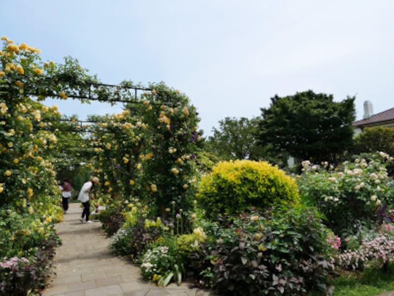 「イングリッシュローズの庭」ではバラのアーチが見事(2021年5月14日撮影)