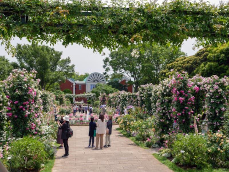 大佛次郎記念館前の沈床花壇「香りの庭」。歩くとふんわりと草花の香りが漂います(2021年5月14日撮影)